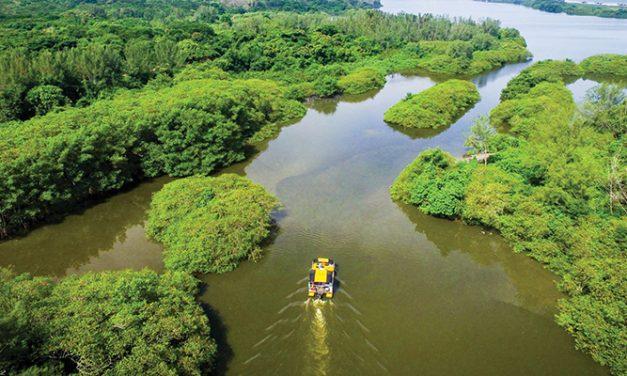Rio também tem seu pantanal